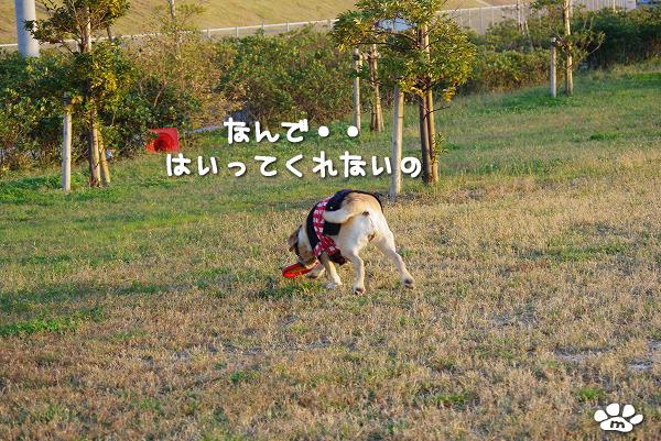 s-myu2009_1108(167)