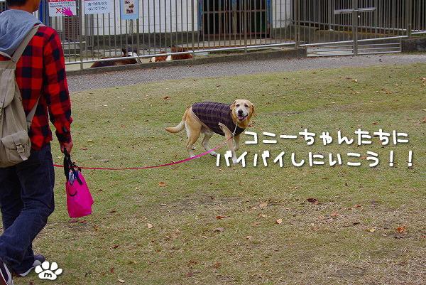 s-myu2009_1129(213)