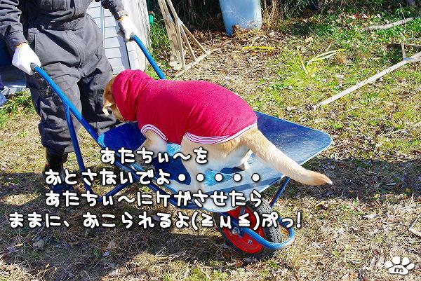 s-myu2009_1219(029)