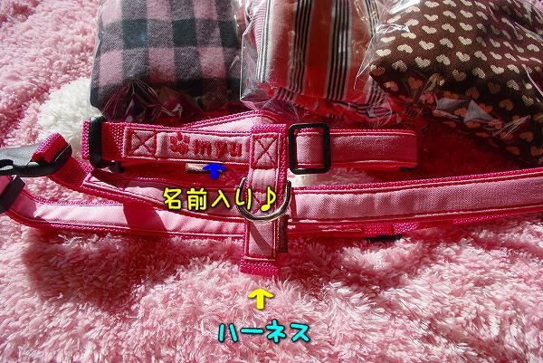 s-myu2009_1221(002)