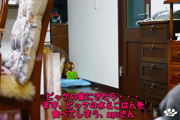 s-myu2009_1223その1
