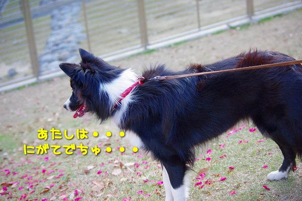 s-myu2009_1227_5