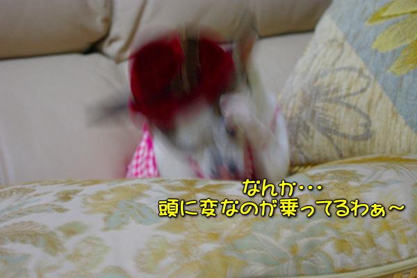 s-myu2009_1231_7