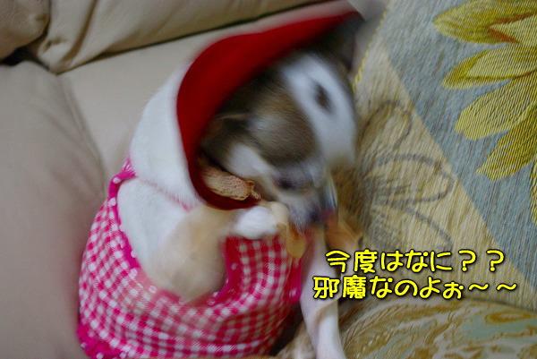 s-myu2009_1231_10
