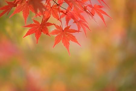 降り注げ 秋