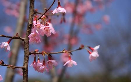 京都府立植物園08