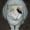 Photos: 悲しみに暮れる親猫
