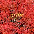 Photos: 滋賀県 石山寺 紅葉