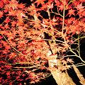 Photos: 滋賀県 石山寺 紅葉 ライトアップ