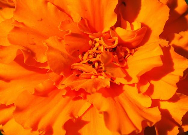 Safari Tangerine 7-15-09