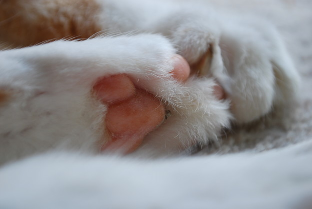 Billy's Paws 12-3-09