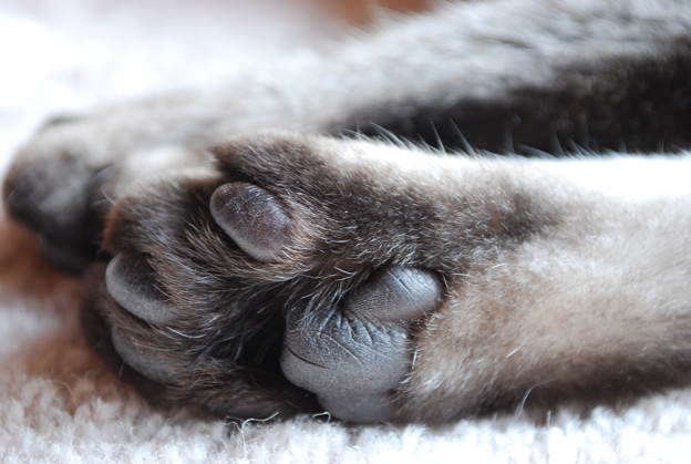 Chavez's Paws 12-3-09