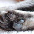 写真: Chavez's Paws 12-3-09