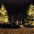 Trees 12-23-09