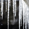 Icicles 1-24-10