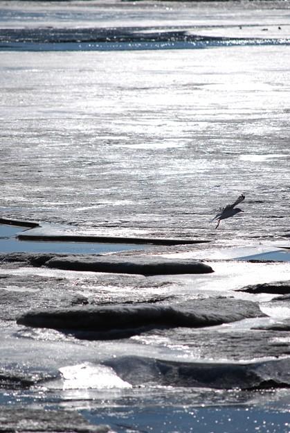 Photos: a Seagull 1-27-10