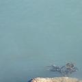 写真: Murky Water 1-27-10