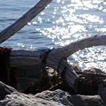 写真: Driftwood 3-7-10