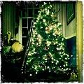 O Christmas Tree No.1