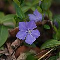 Photos: Periwinkle 5-6-11
