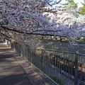 Photos: 善福寺川緑地公園1