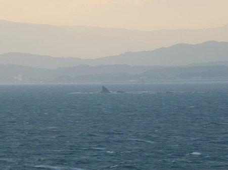 091115-江の島 (41)