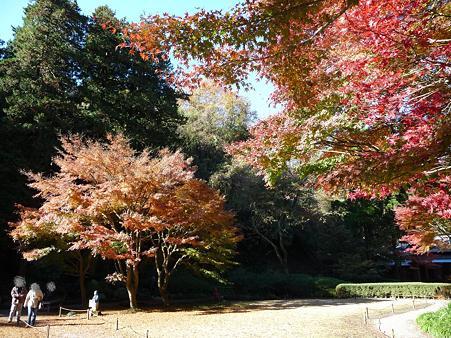 091204-明月院庭園 (38)