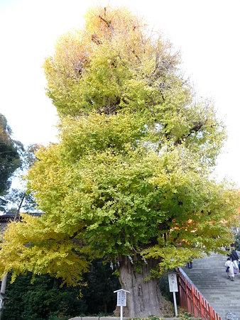 091204-八幡さま (4)