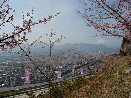 100223-松田山 河津桜 (70)