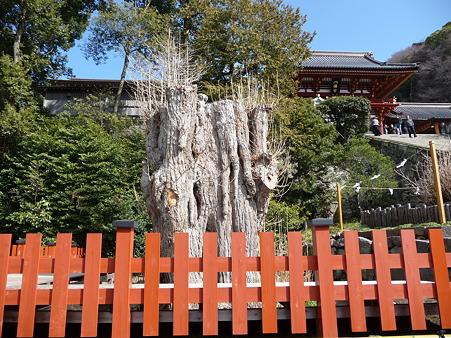 110225-鶴岡八幡宮 (35)