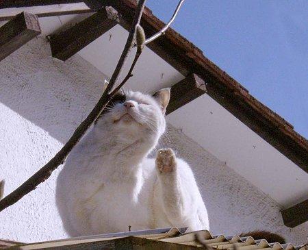 屋根に乗ってcyomi5ご機嫌拡大