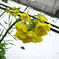 写真: 20100113_123046_00