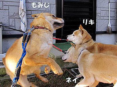 もみじ_94061