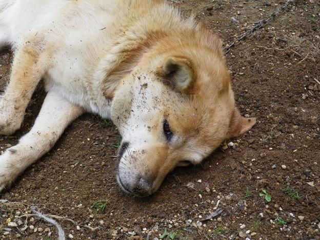 泥だらけのモグ