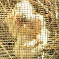 Photos: 産まれたての鳩のヒナ