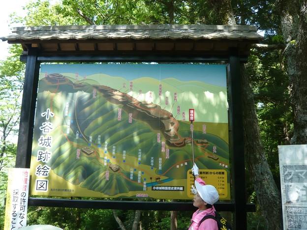 P1210737小谷城跡絵図
