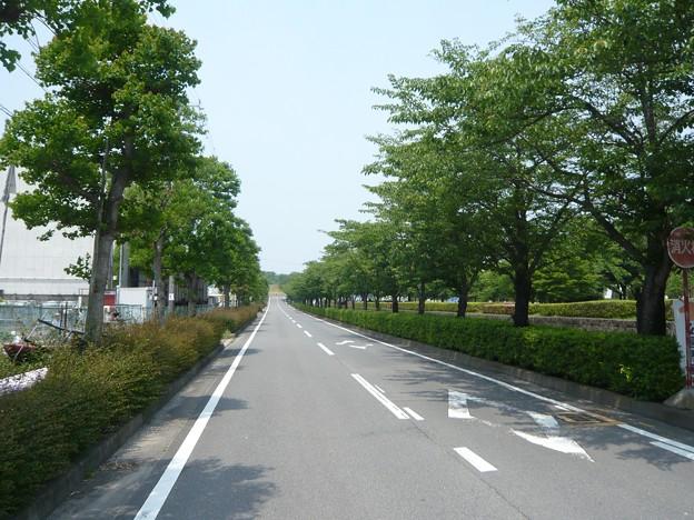 P1220031木曽川祖父江緑地公園横