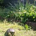 写真: 花束と亀