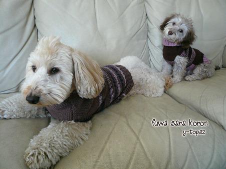 2ワンでセーター 1