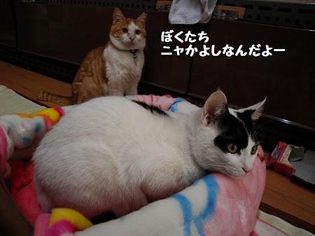 はっちゃん&ゴロ