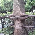 Photos: ♪『この木、凶暴につき』