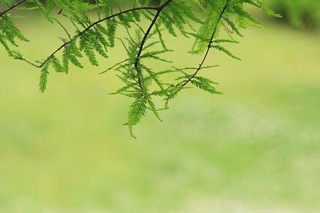 2012.05.30 和泉川 木陰