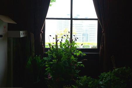 2012.06.01 山手 外交官の家 窓景