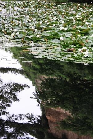 2012.06.18 三渓園 スイレン池