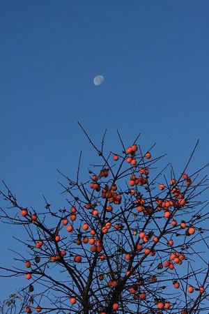 2009.12.06 和泉川 月と柿