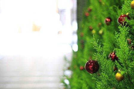 2009.12.19 新橋 クリスマスツリー