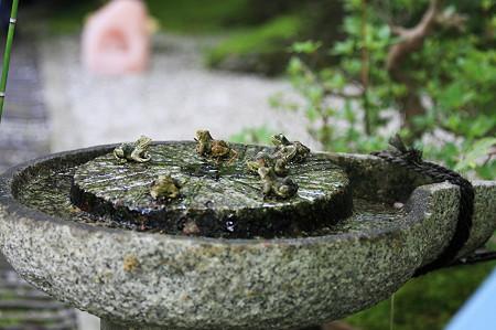 2010.04.30 哲学の道 民家にヨニ…蛙