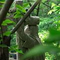 写真: 2011.06.12 山手 外人墓地 マリア