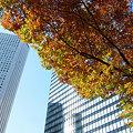 Photos: ビルの谷間の秋も去りゆく。晩秋の西新宿。2008_1114_fpxF710_DSCF1054