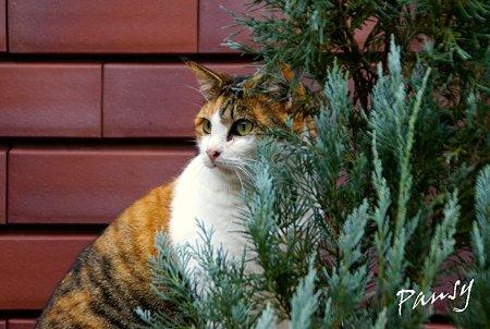 美猫の三毛さん・・